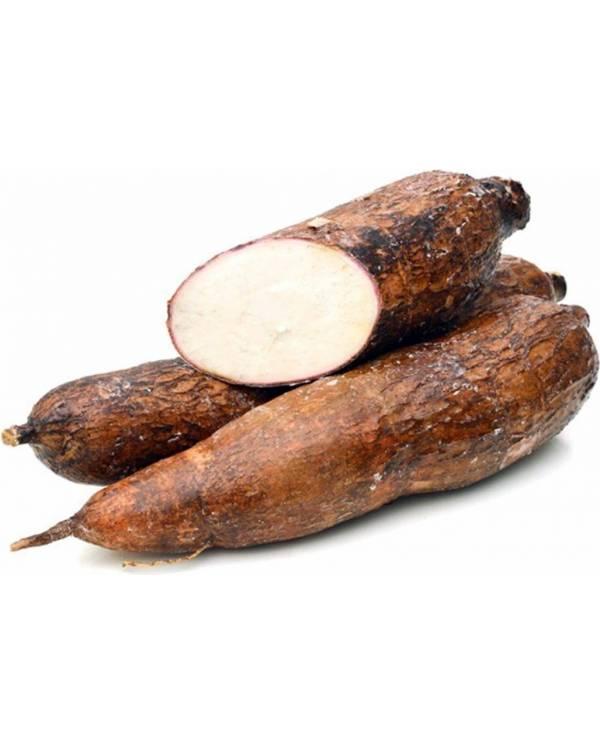 Yuca or Cassava