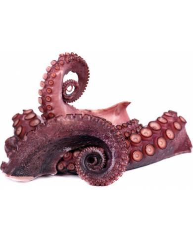 Octopus (Pulpo)