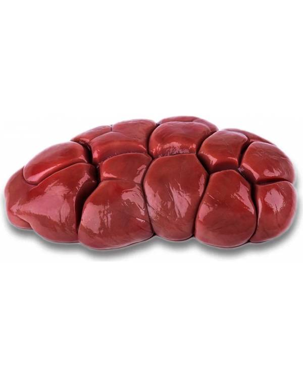 Beef Kidneys (Riñones de Res)